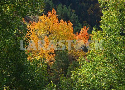 Autumn landscape in the Caucasus