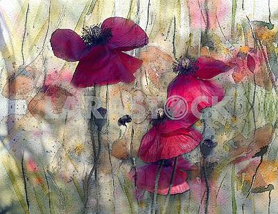 Scarlet poppies, poppy boxes, a flying bee. Treatment under a water color