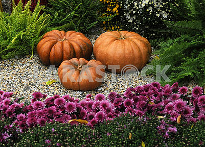 Pumpkins at the Chrysanthemum Festival