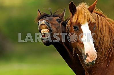 Portrait Horses on pasture in spring