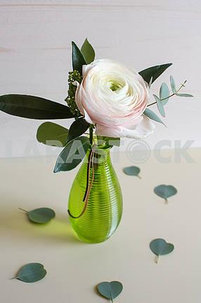 Ranunculus flower