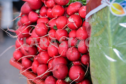 Bunch of radish next to a cabbage on a counter.