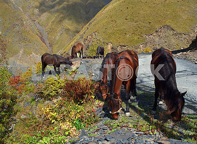 Horses graze on a mountain road