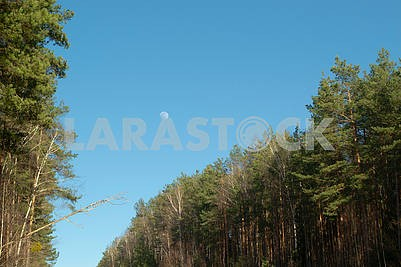 Moon in summer day sky above landscape in forest