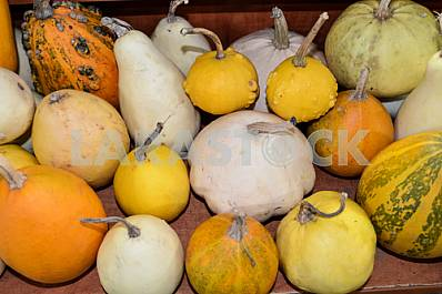 Pumpkins of different varieties are on the market shelf.
