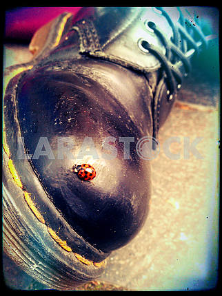 Ladybird on a Boot