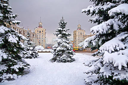 Zaporizhia. Spruces in the snow