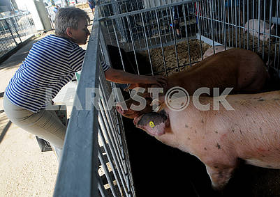 Woman near the pen with pigs