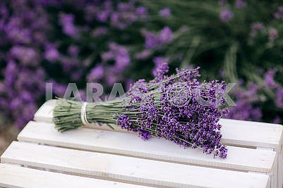 Pile of lavender flower bouquets on a wooden old bench in a summer garden. bouquet of lavender