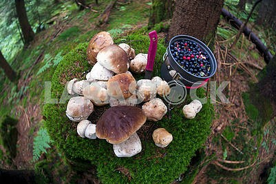 stump with mushrooms