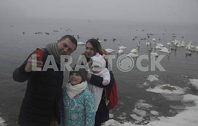 Люди фотографируются на фоне лебедей