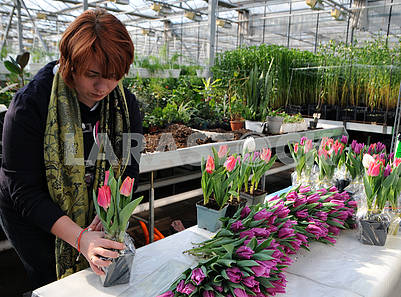 Employees of the greenhouse and hothouse economy