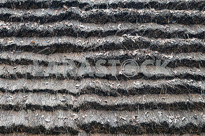 Gray old dry  background  of a straw roofcloseup.