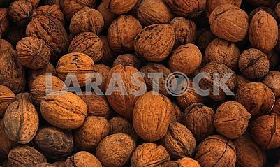 Walnuts in a shel