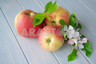 Ripe apples with blossoms on blue wooden table