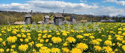 Windmills in the spring