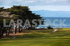 Trees on the coast of California