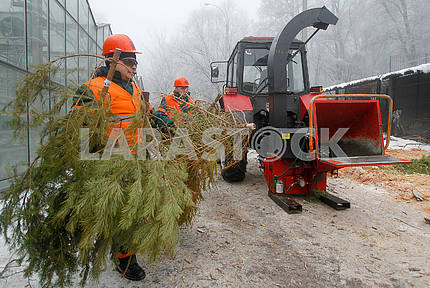 Recycling of Christmas trees