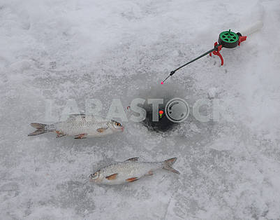 Fish on ice near ice hole