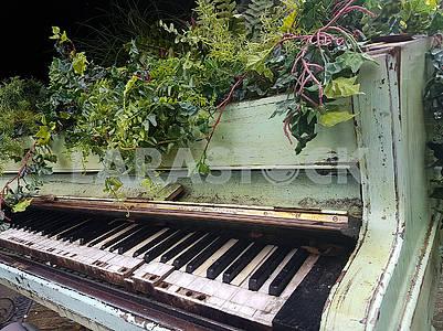 Цветы, росшие из рояля