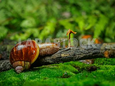 Snail Achatina giant crawling on a dead branch on a green background in the forest