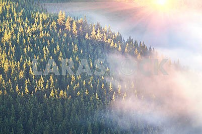 Carpathians and fog