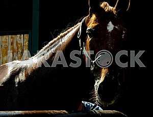 Освещенный голова и шея лошади на темном фоне