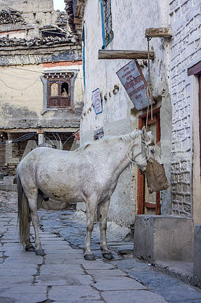 Horse of the white wall of the building