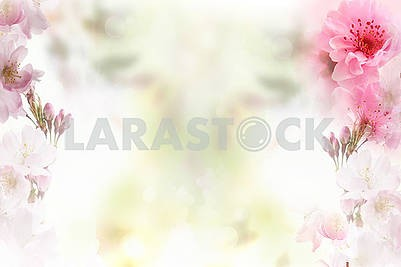Delicate light background, large pink flowers at the edges of the image