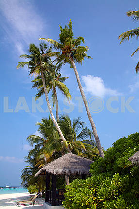 huts and coconut trees on the beach