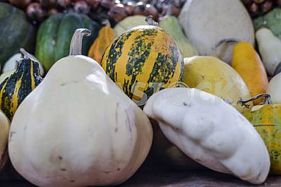 Pumpkins of different varieties are on the market.