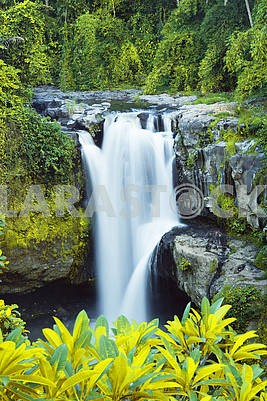 empty background with waterfall in tropical forest