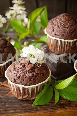 Homemade delicious chocolate muffins on dark wooden background with cherry flowers