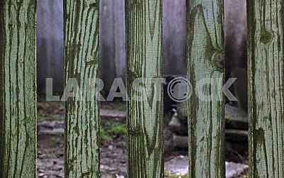 Old green wooden fence on an autumn sunny day
