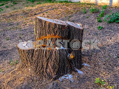 The stump remained from the sawn tree