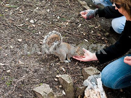Woman Feeding a Squirrel