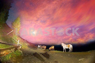 Horses in the night mountains