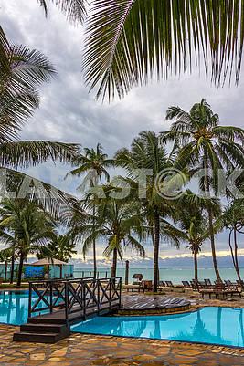 Palms in Zanzibar