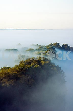 Crowns of trees shrouded in fog. The village of Mezin. Chernihiv region