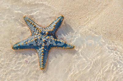 Starfish on the sand in Zanzibar