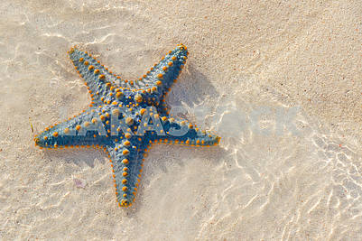 Starfish on the sand in Zanzibar