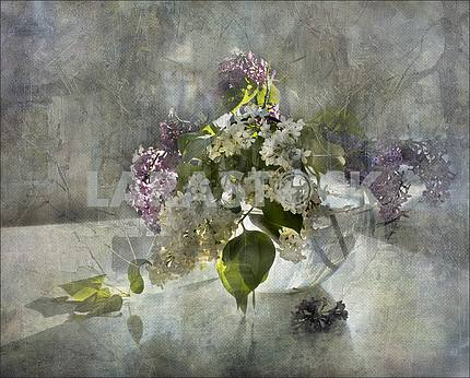 Still life sprig of white and pink lilac in a round transparent glass vase. Treatment
