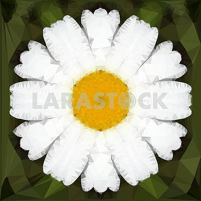 polygonal open flower with petals daisy on black, low poly camomile