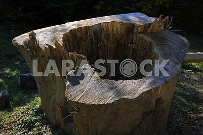 An old stump of cut tree