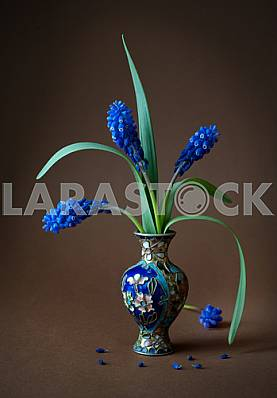 Flowers of hyacinths in blue weight on a dark background