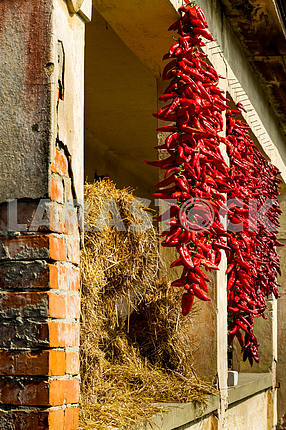 Bundles of hot peppers scratched near hay
