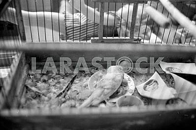 Dead parrot in a cage