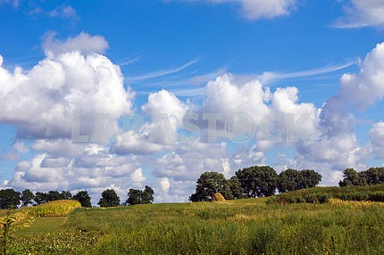 Field with trees and blue sky with white clouds