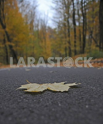 Autumn leaf on the road