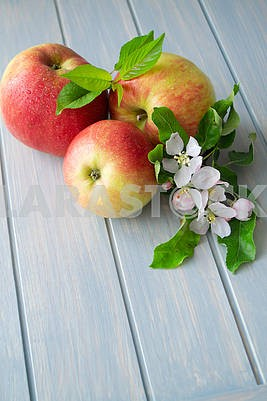 Apples and apple tree blossoms on a blue wooden background, vertical image with copy space